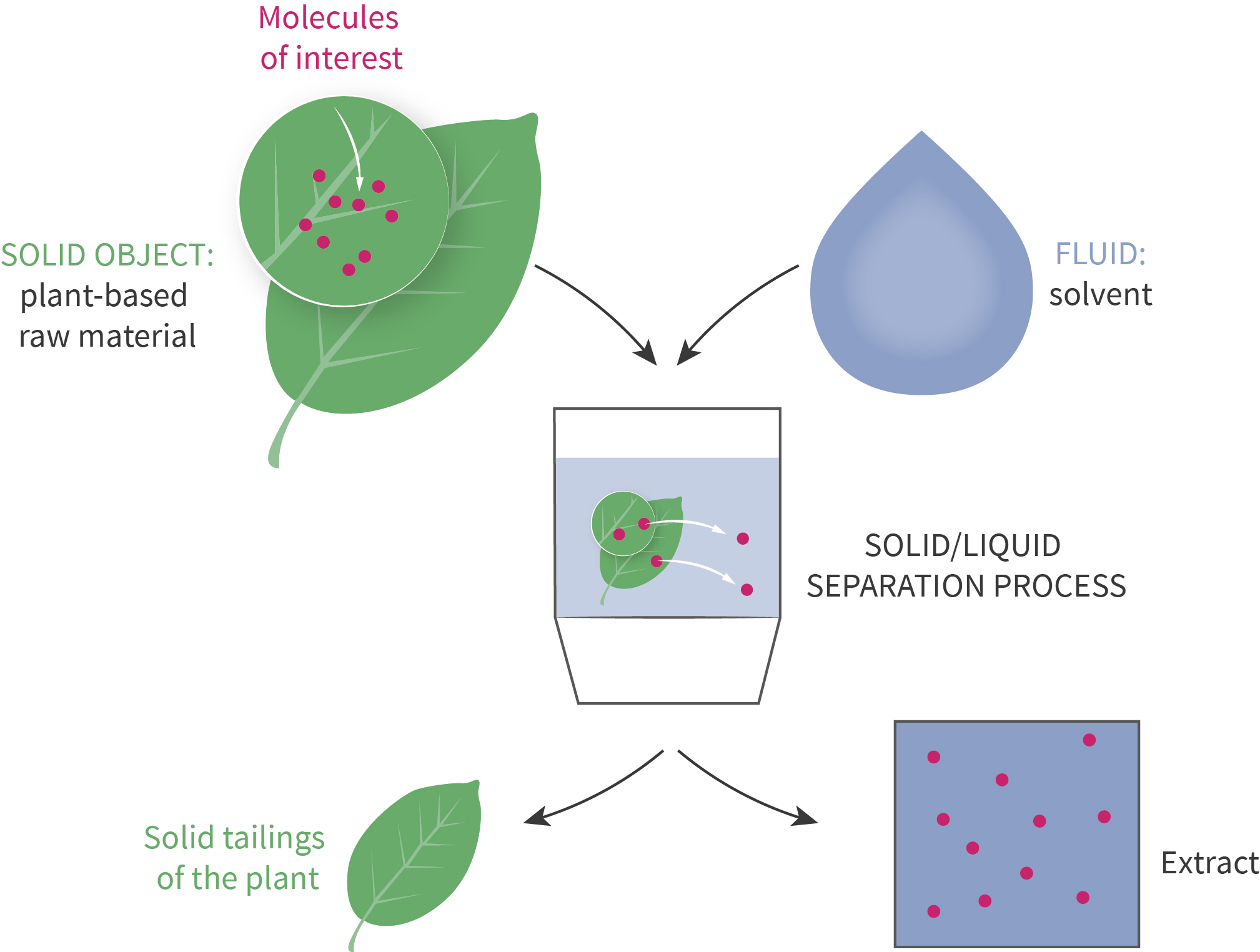 Plant Extraction Berkem Extraction Vegetale